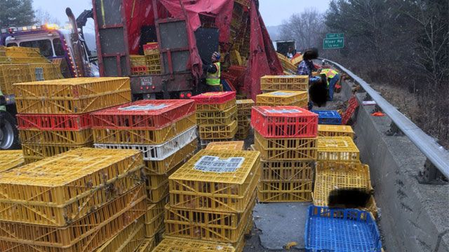 Tractor-trailer carrying live chickens overturns on I-84 eastbound in Southbury