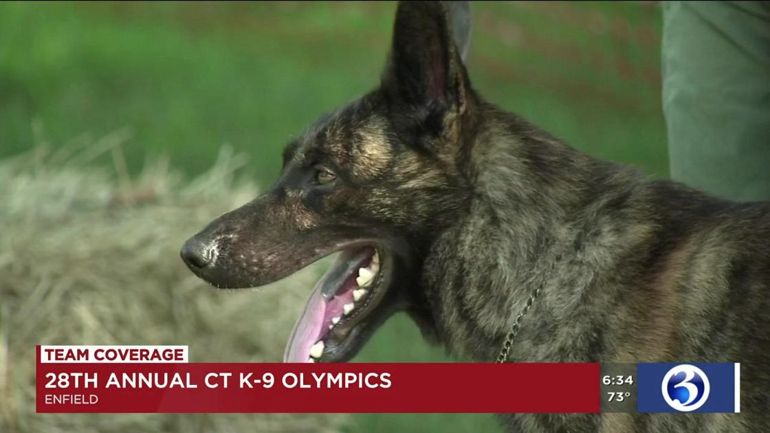 Connecticut K-9 Olympics set for Saturday