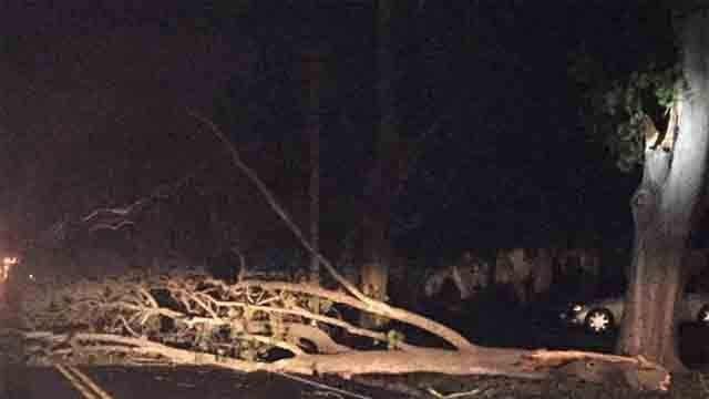 Downed tree, wires closes College Street in Old Saybrook