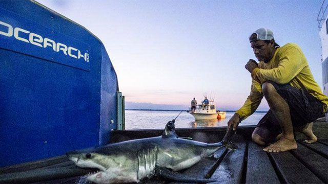 Great White Shark spotted off Guilford coast in September
