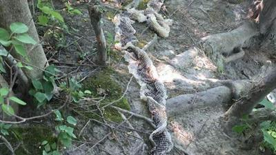 Giant snake skin discovered near ME boat launch