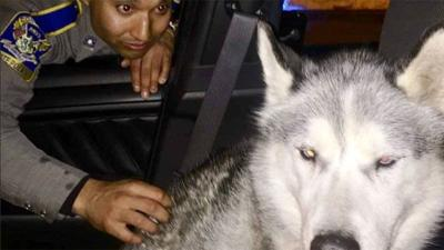 CT State Police caught dog wandering on Route 8
