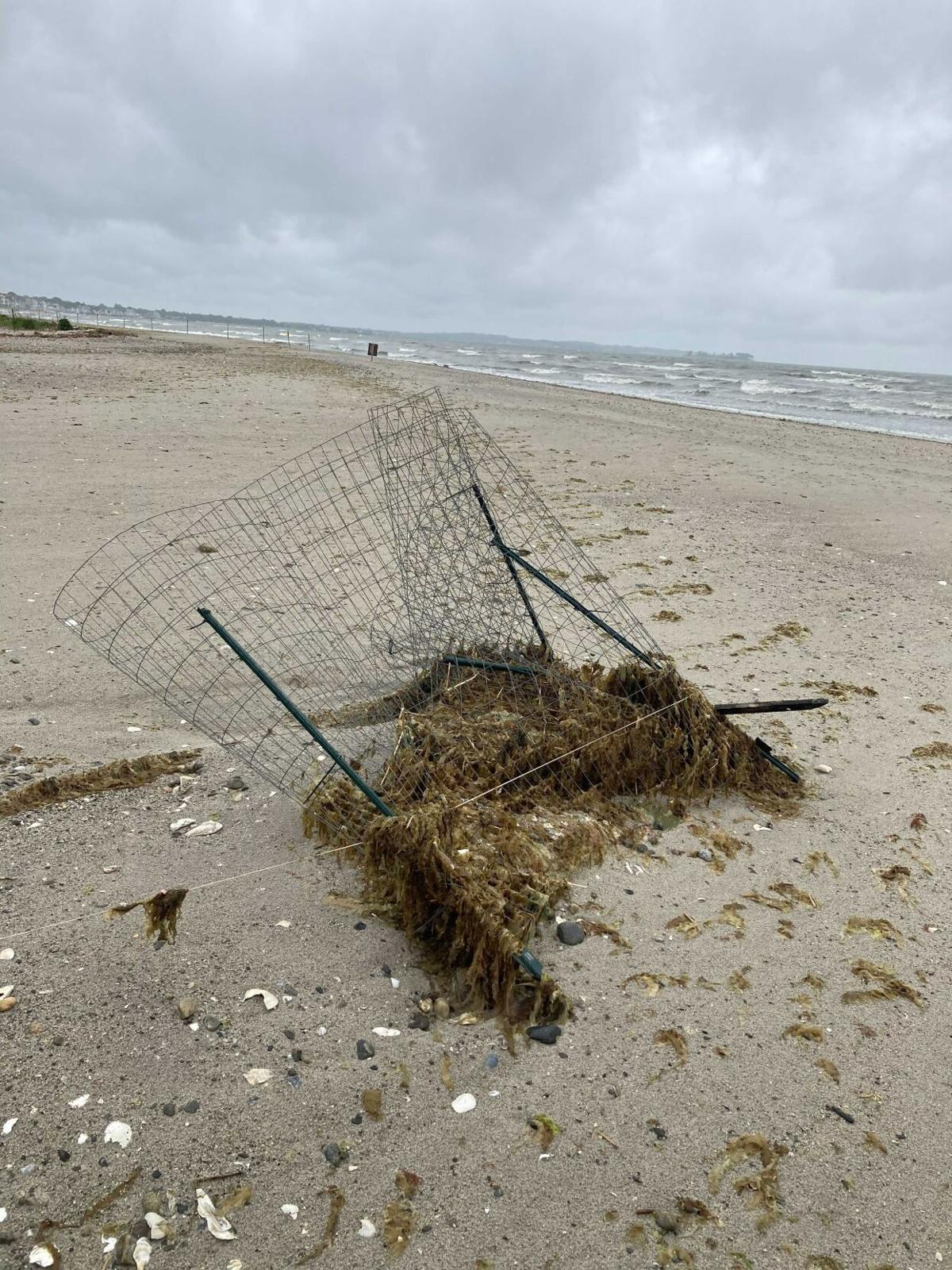 Piping Plover nest exclosure after the memorial day weekend storms.