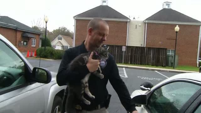 This cat just became a cop's 'purrfect' partner