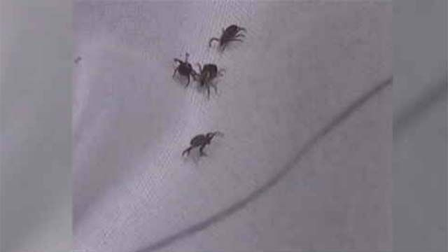 UConn wants your ticks for testing
