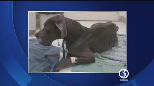 City of Bristol paying for dog's medical bills