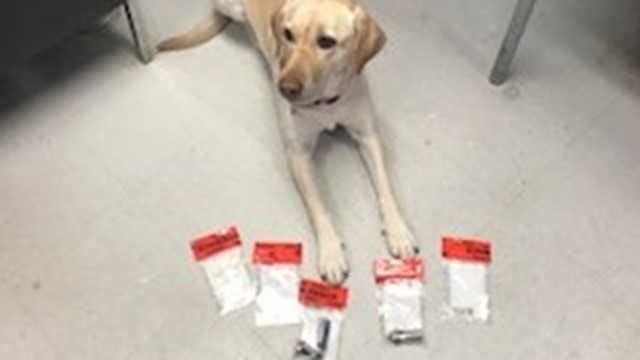 State Police K9 assists in heroin seizure