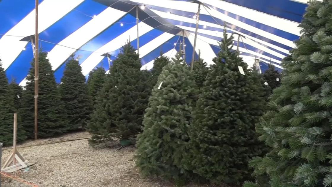 Meriden Christmas tree farm to open this weekend - WFSB