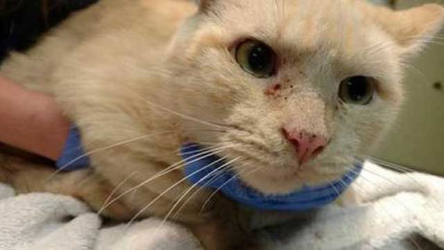 Cat abandoned in the cold is recovering