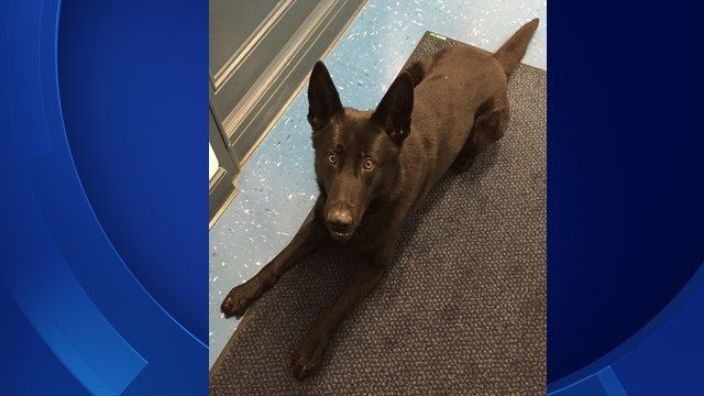 State police mourn unexpected passing of K9