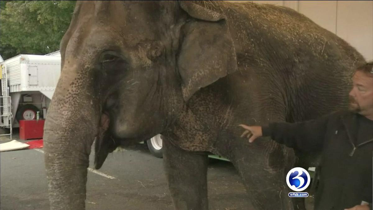 Thousands call for elephant at Big E to be sent to sanctuary