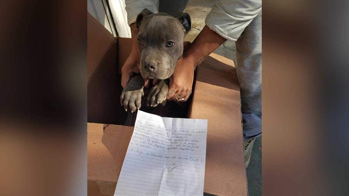 12-year-old boy leaves dog at shelter to save him from abusive father, heartbreaking note says