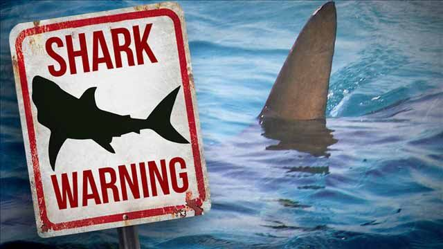 Teen among two people bitten by sharks off Long Island in NY