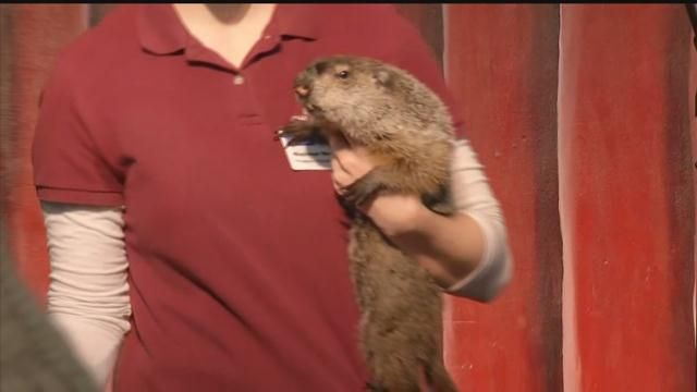 CT's groundhog contradicts Punxsutawney Phil in prediction