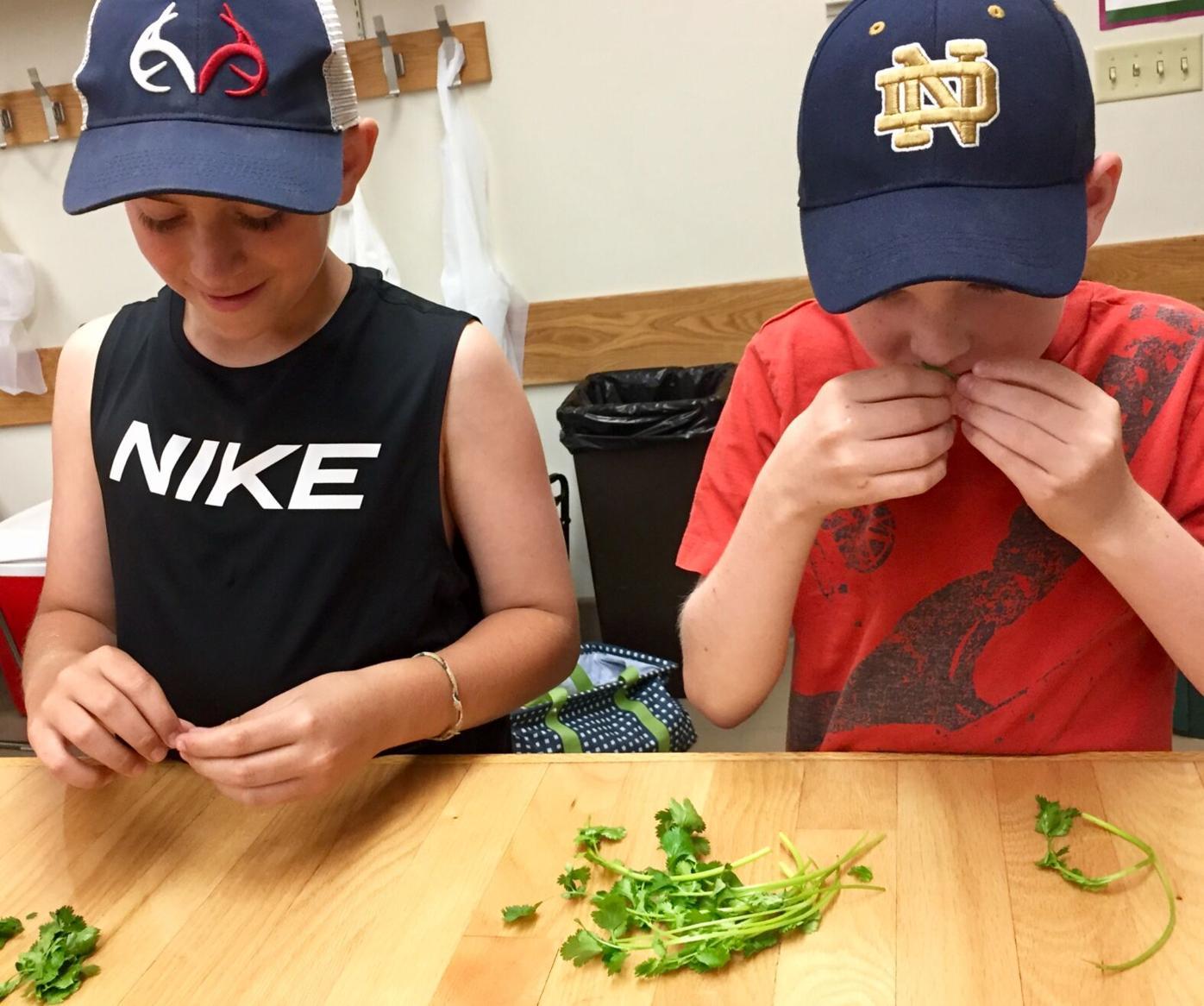 Junior Master Gardeners-cilantro