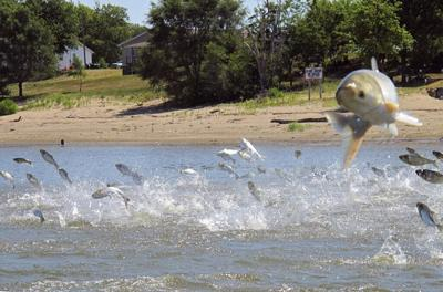 Project at Lock and Dam 19 to test tools to combat Asian carp