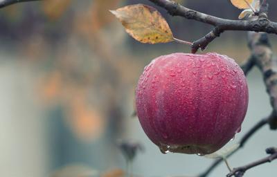 Fall flavors: pumpkin vs. apple