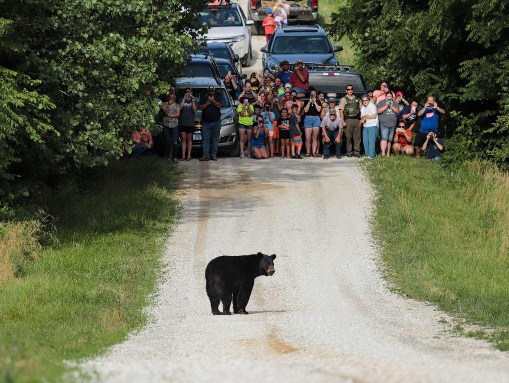 Black bear sightings in Illinois quite rare