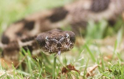Snake_08911.jpg