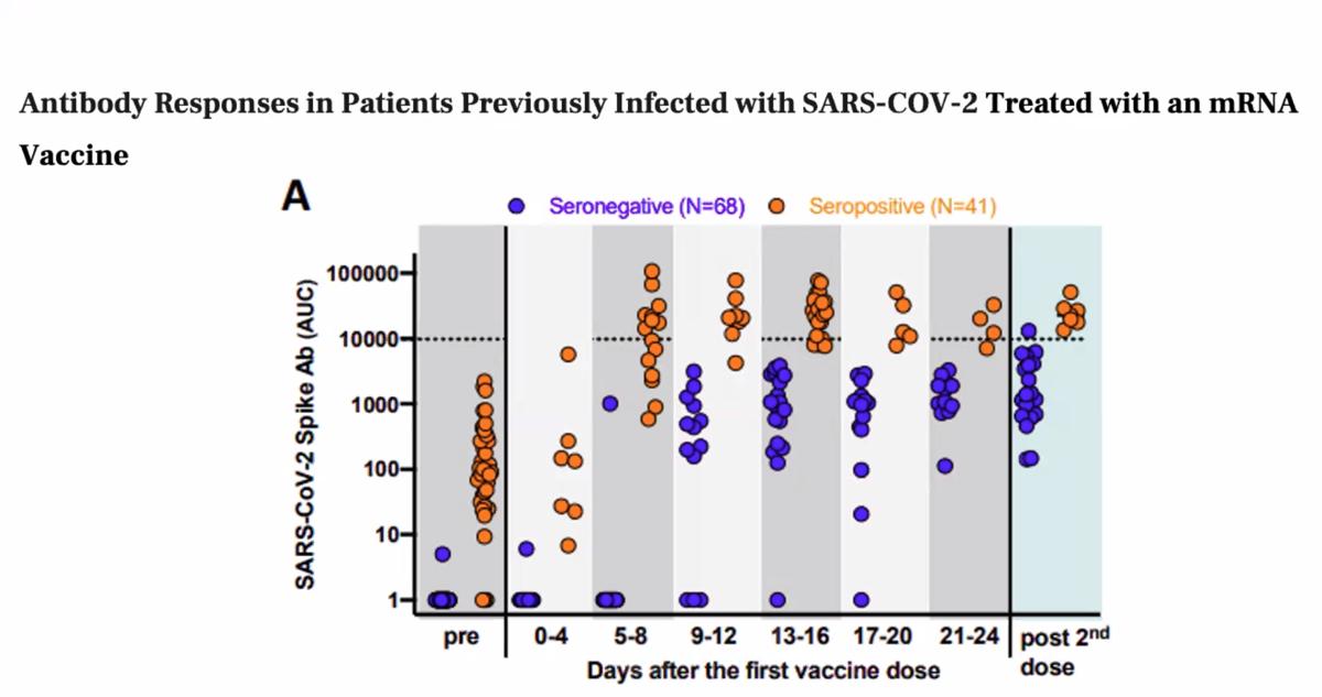 Antibody response COVID-19 vaccine