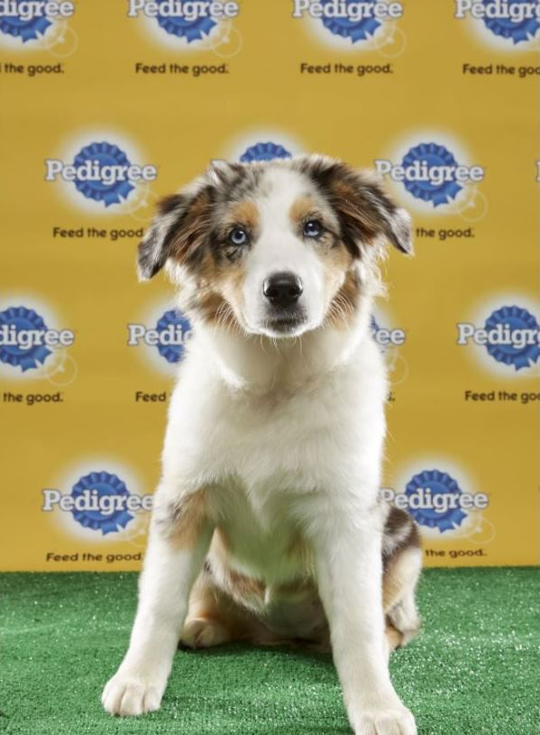 Former wcac puppy to participate in animal planets puppy bowl xiii wcac dog tucker solutioingenieria Choice Image