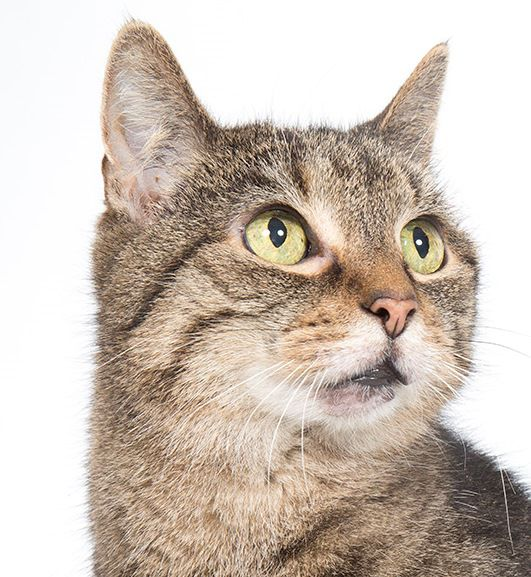 WCAC Pets of the Week-Cat