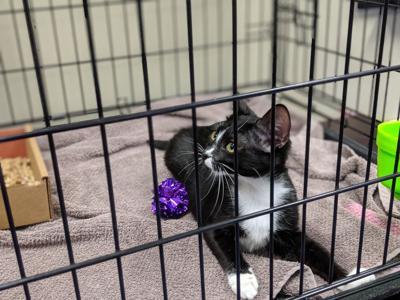 0719 Kitty Hall