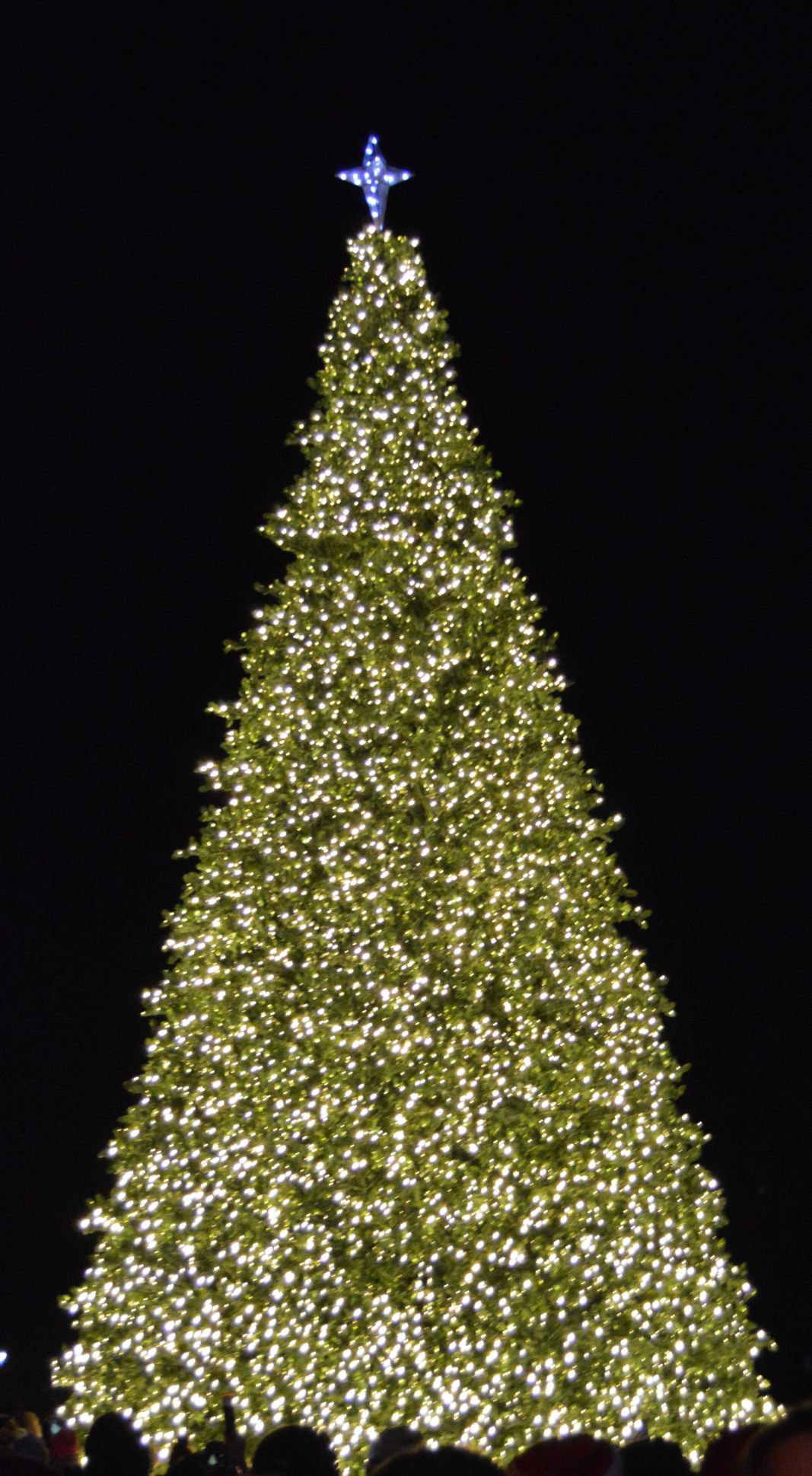 New Christmas tree aglow on Public Square
