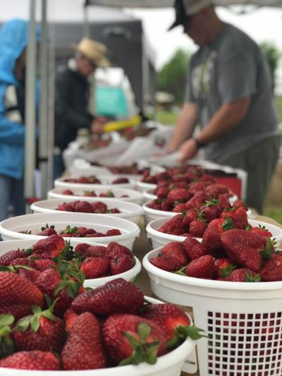 Nolensville Farmers Market