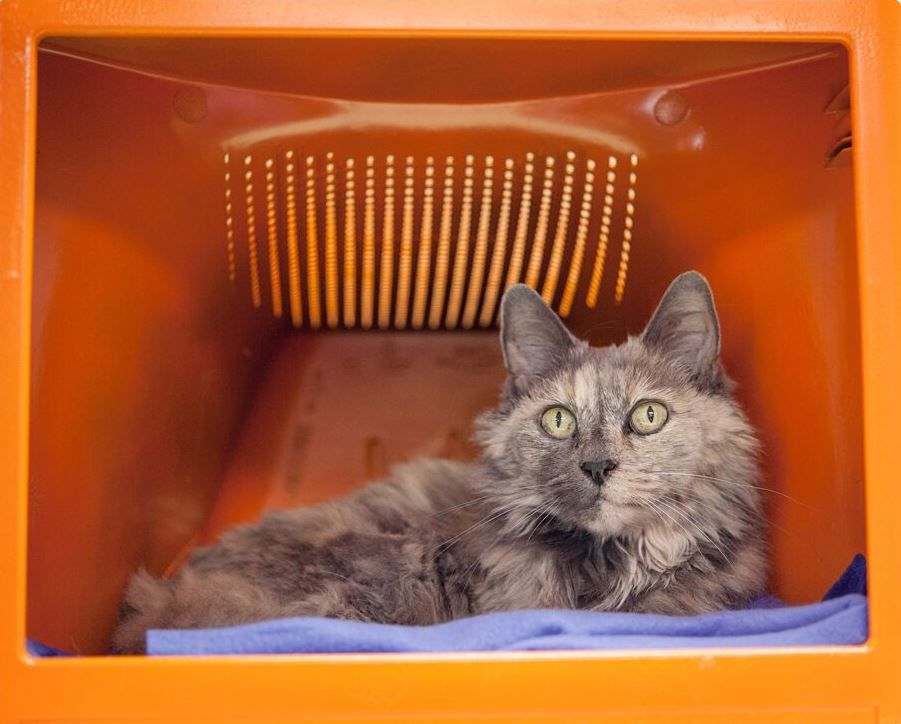 WCAC pets of the week- Cat