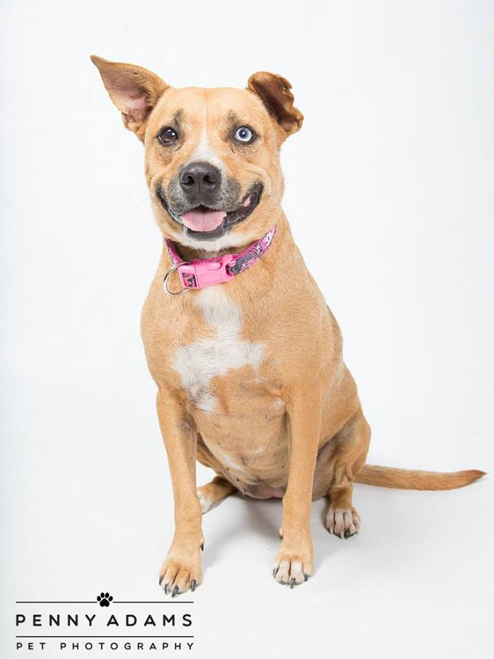 WCAC Pets of the Week-Dog