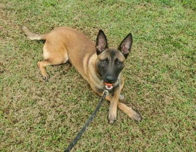 Pax Brentwood Police K-9