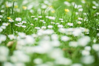 weeds stock