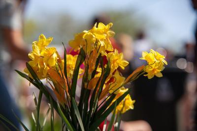 Nolensville's Buttercup Festival returns