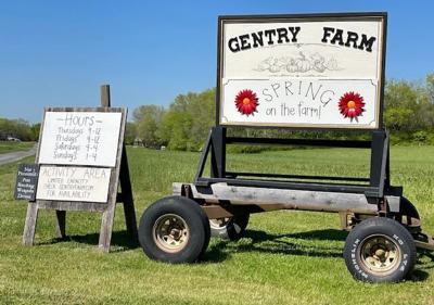 Gentry Farm spring sign