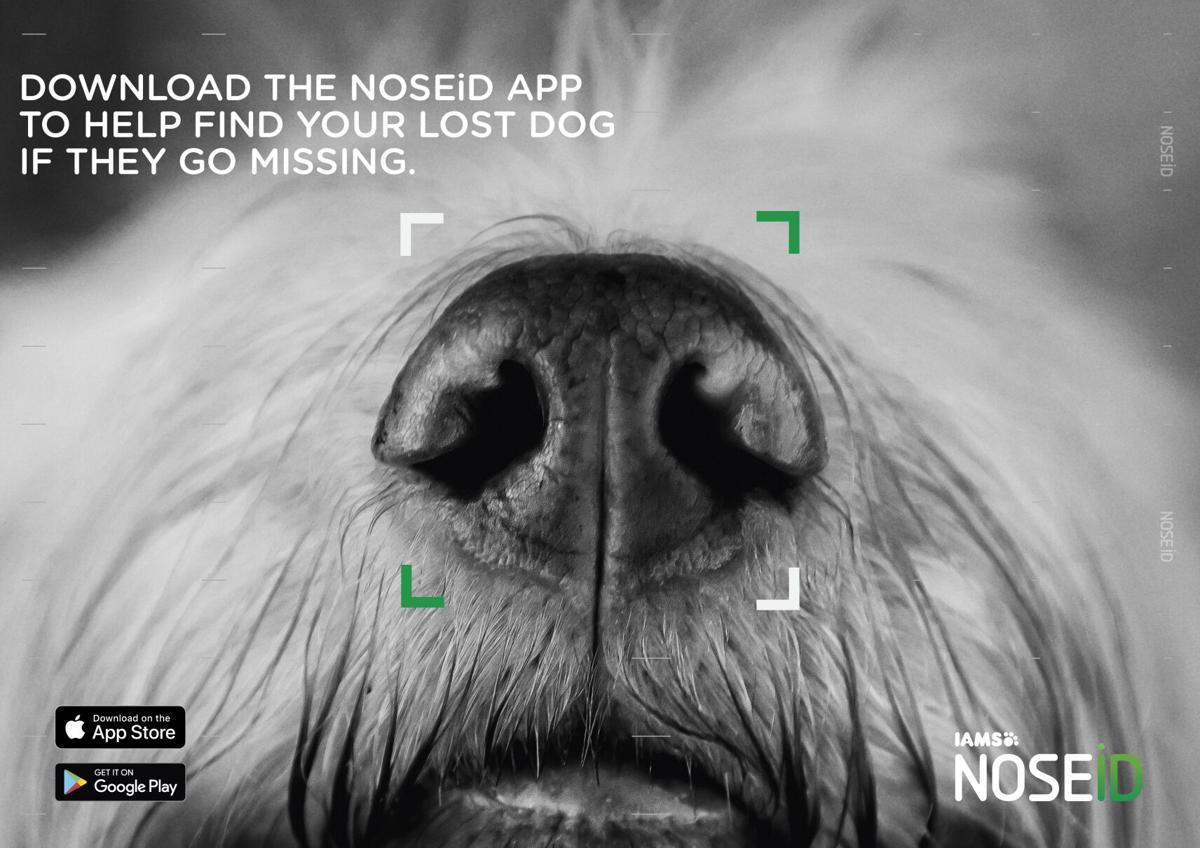 NOSEiD Visual [Landscape]