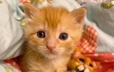 WCAC kitten
