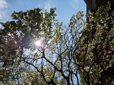 sunshine-and-flowers-
