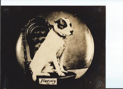 Harvey the mascot