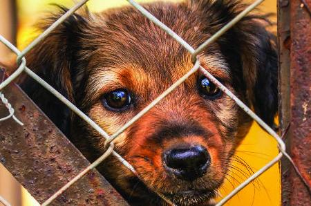 New tether law puts teeth in MJ animal control code | Mt