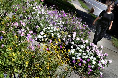 Flowery front yard