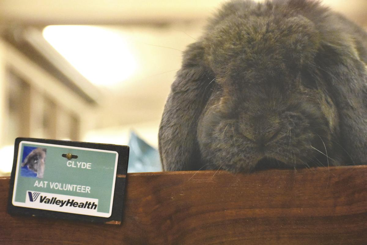 Therapy bunnies bring joy to hospital patients | Winchester Star