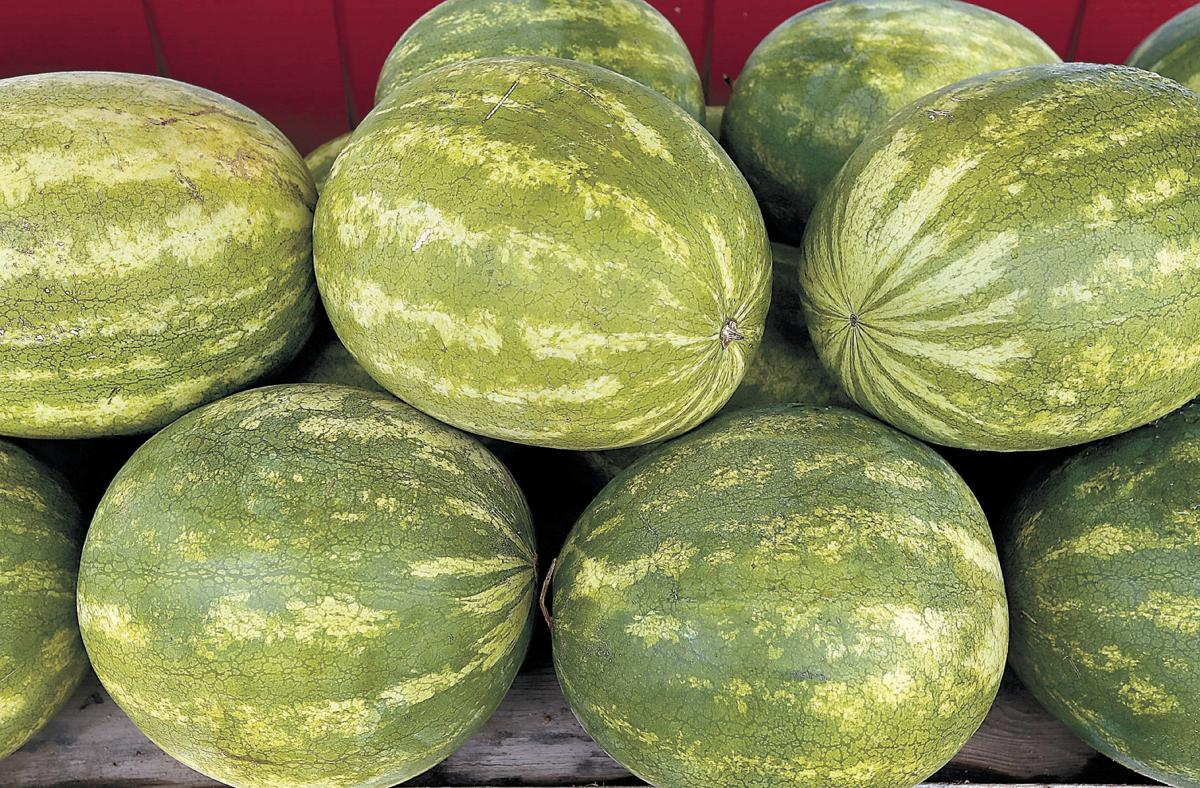 The Time Is Ripe For Picking Watermelons Food Winchesterstar Com