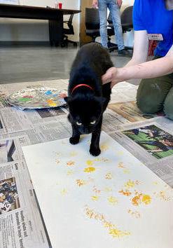 SPCA Art Auction