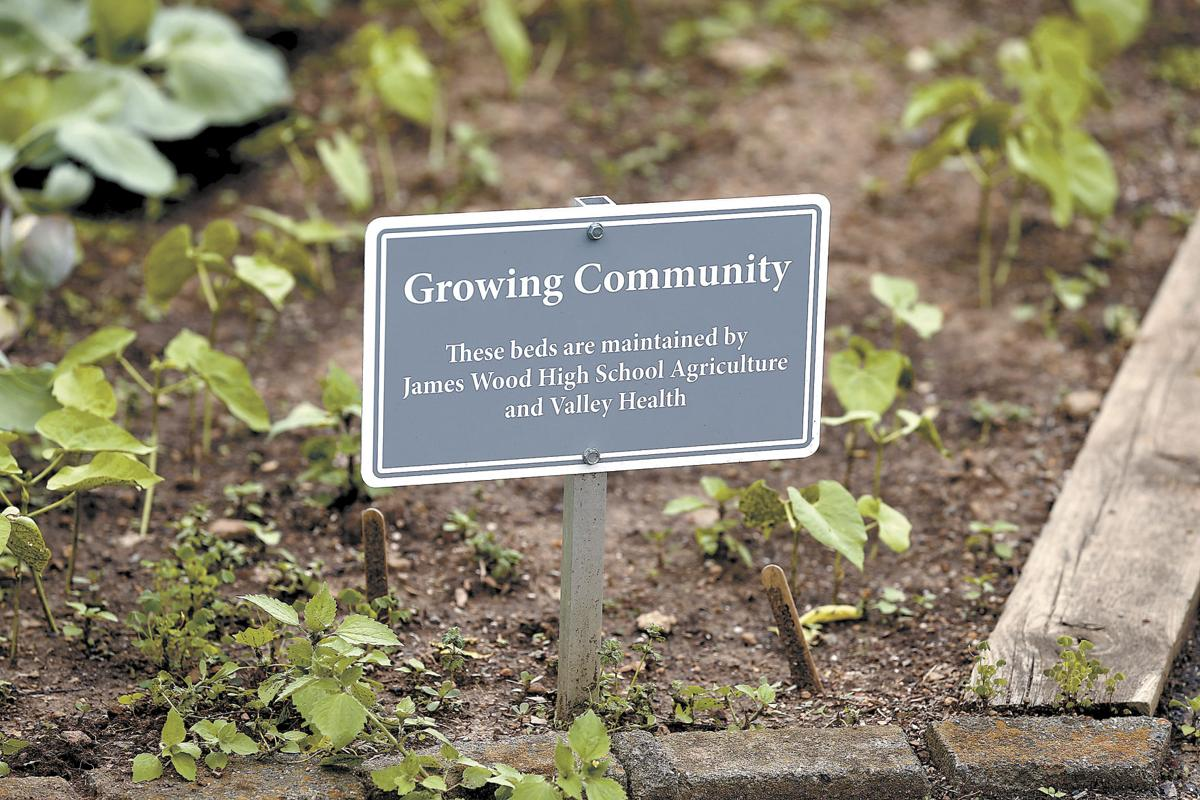 A community garden takes root