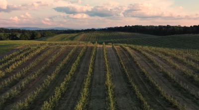 Winchester-Frederick County video