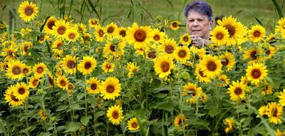 Sunflowers for a cause