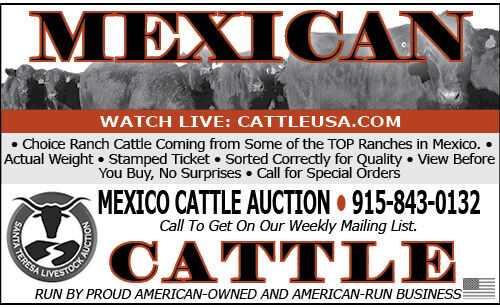 MEXICAN CATTLE FOR SALE