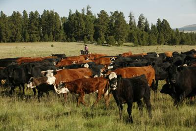 Guest opinion: Things to consider as beef production sales ramp up