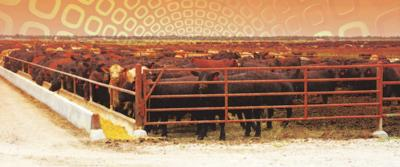 Cattle Traceability Could Have Benefits Beyond Disease Control